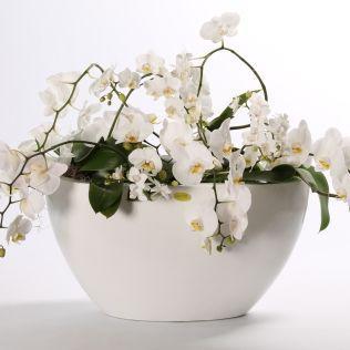 Домашние цветы купить интернет магазин недорого