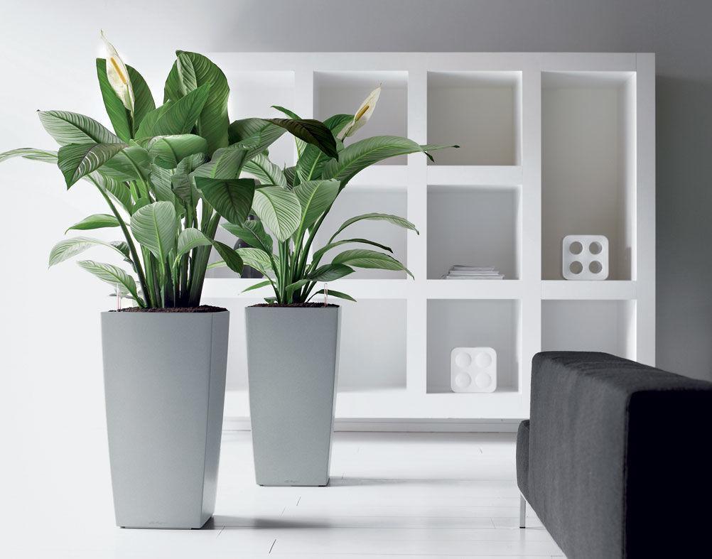 Растения Для Дома Интернет Магазин