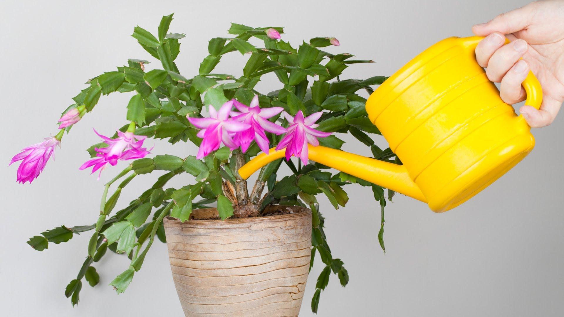 Сухой полив цветов