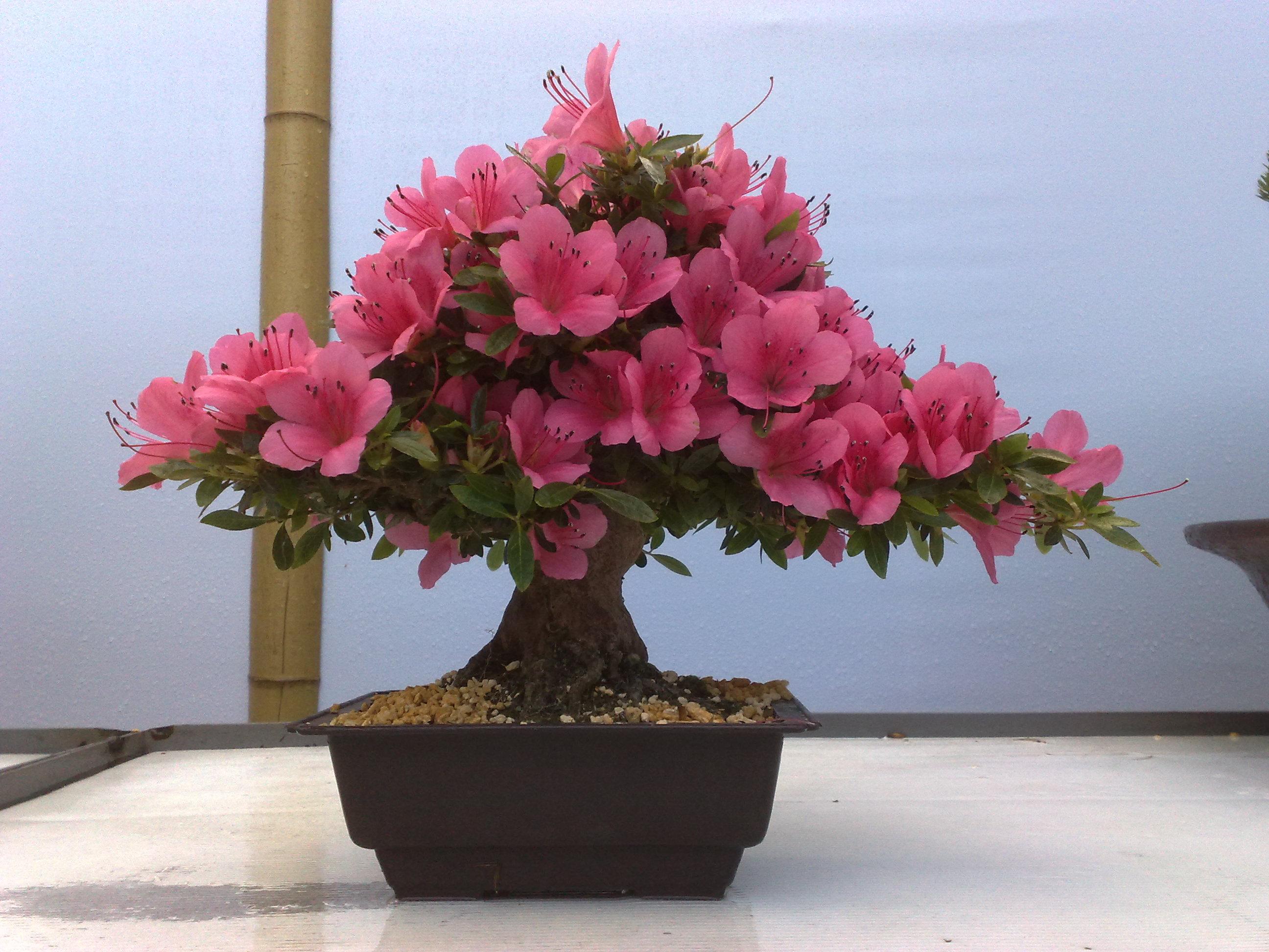 Купить комнатные цветы в москве