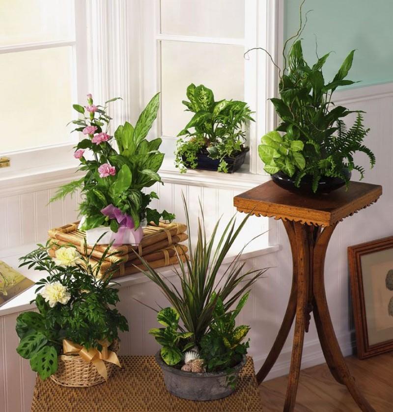 дизайн растениями своими руками