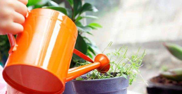 Чем поливать цветы в домашних условиях 64