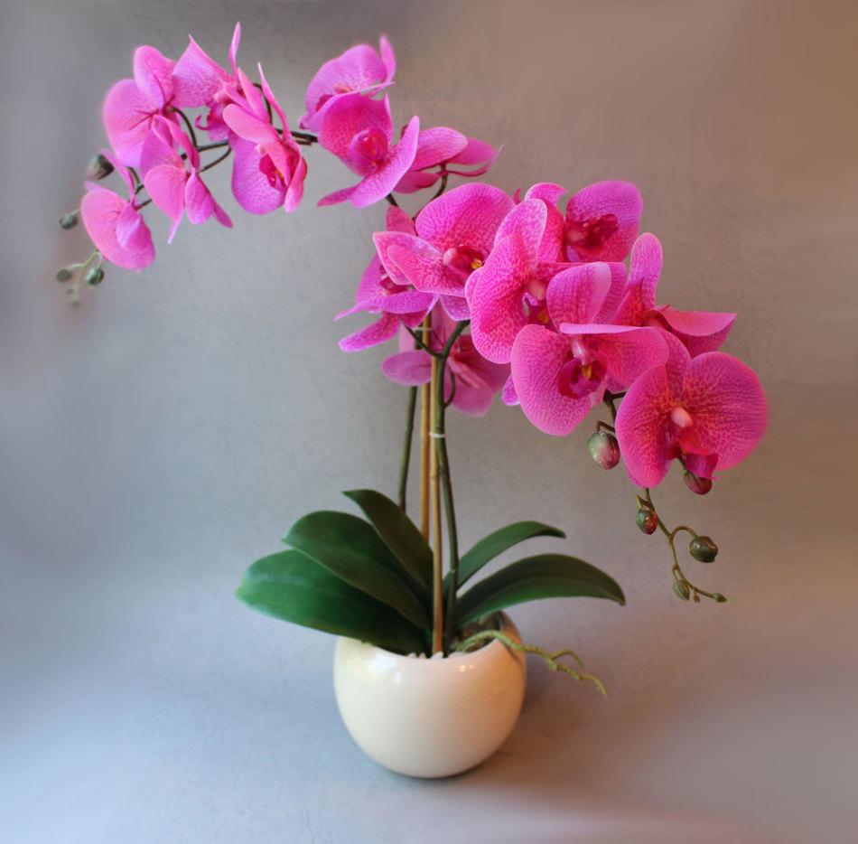 место орхидеи фото красивые картинки в горшках раз тот