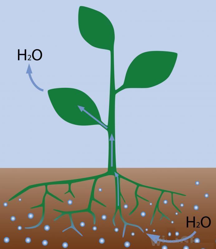 картинка с корнем вод