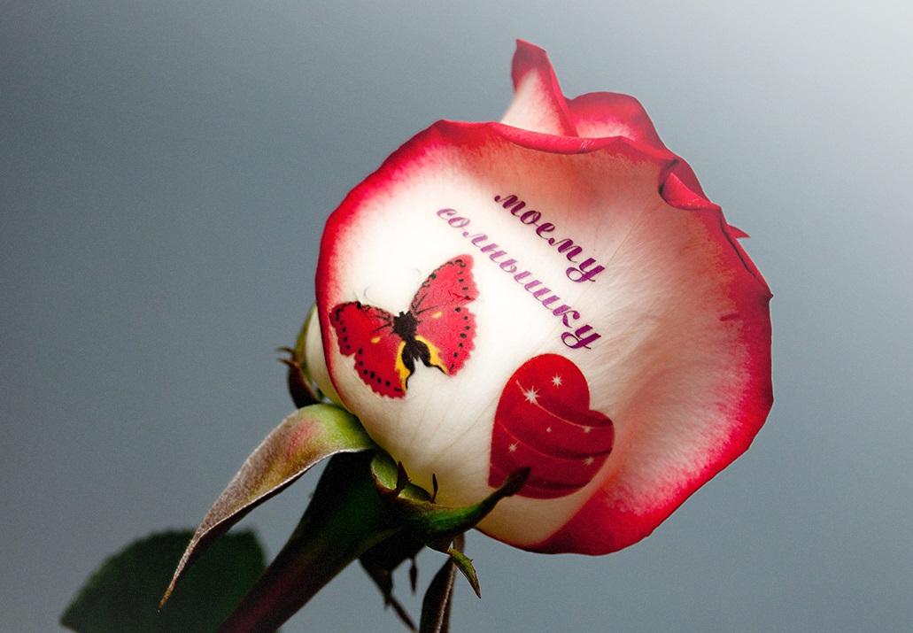 выполнения розы с поздравлениями на лепестках них
