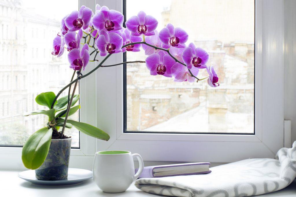 орхидеи в ящике на окне фото время