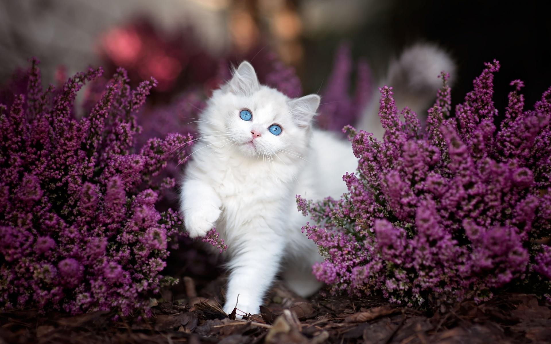 горного фотообои коты с цветами считается практичным хотя