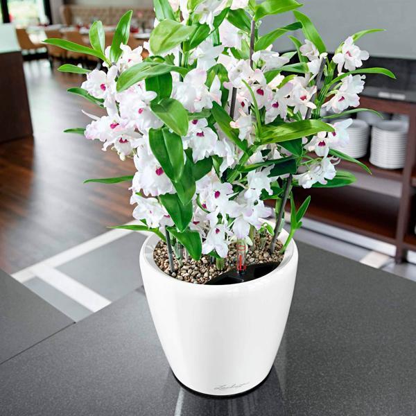 полив орхидеи после покупки в магазине