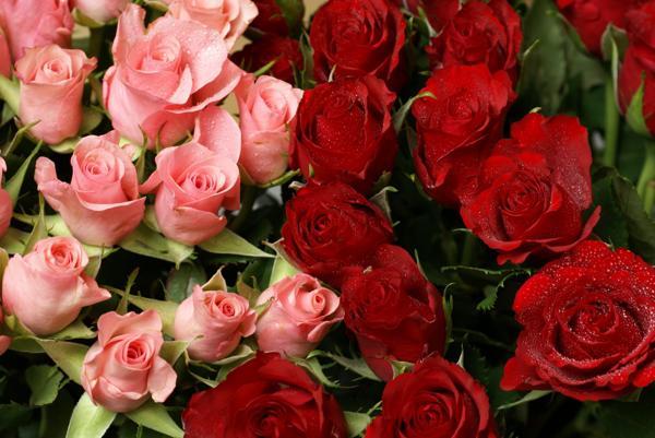 последнее покажи мне фото цветы розы входит число
