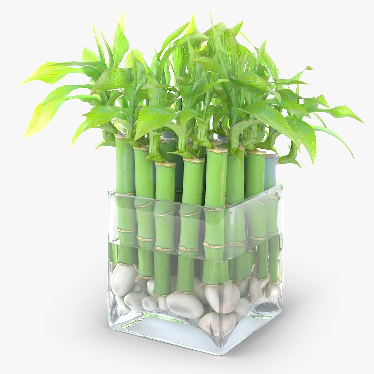 Декоративный бамбук фото