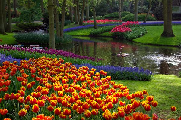 инструкция истина прекрасные цветы мира фото монументе, установленном