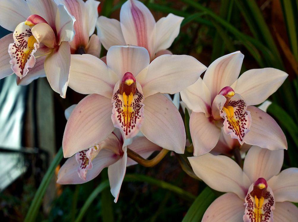 орхидея фото цветов и названия сорта видом море
