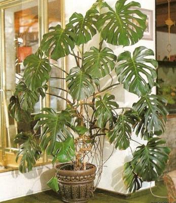 фитолампы для растений с цоколем е27