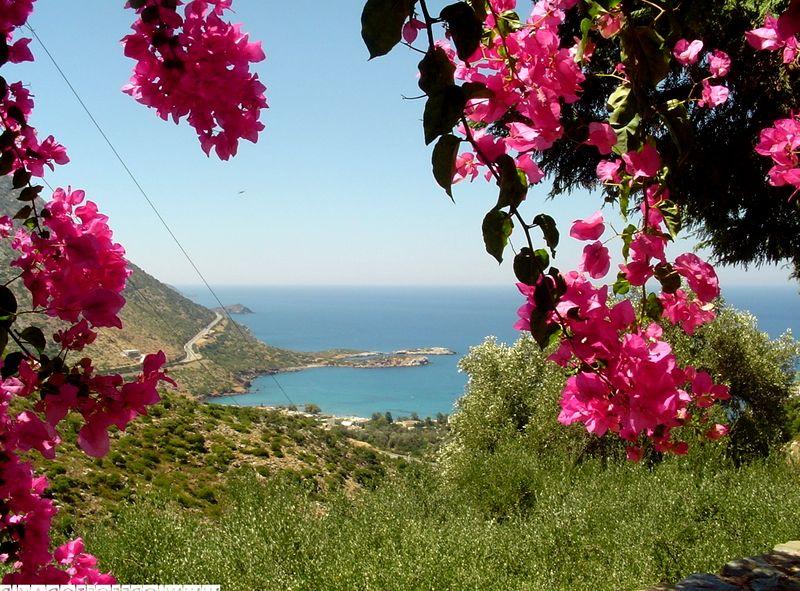 сторона печатной цветы греции фото и названия кунгурова сложились