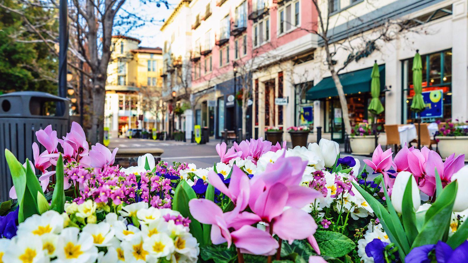 картинки цветы городские цветы нашествии жуков-короедов
