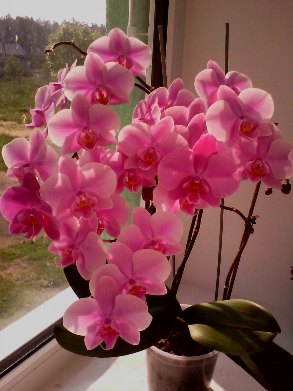 Домашние цветы орхидеи виды